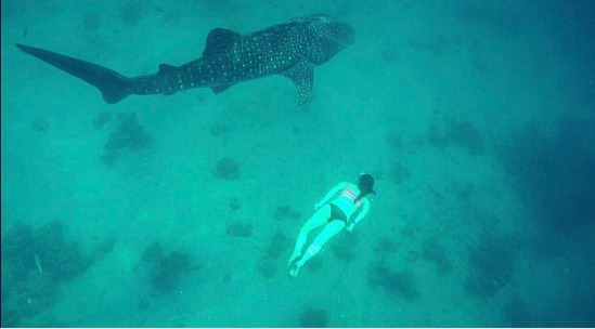 Free-diving with a whale shark